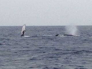 13/03/21 2日間でジンベイとクジラを見られる沖縄 慶良間