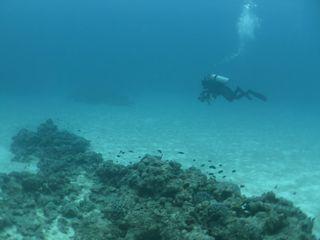 14/03/09 海に入れるだけで幸せです チービシ