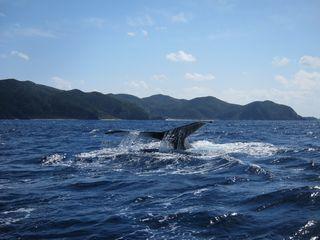 14/03/23 クジラって本当にいいやつです 慶良間
