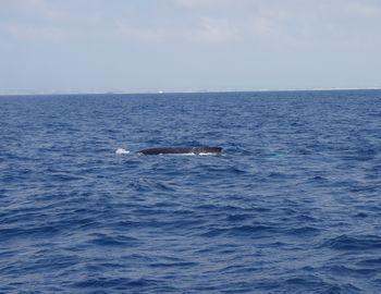 15/03/18 水中でクジラの声が近づいてくるとドキドキしますよね。 慶良間