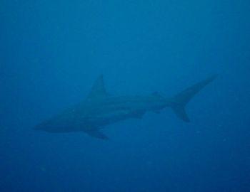 15/08/22 今日も無事にサメに出会えました! 万座、真栄田岬