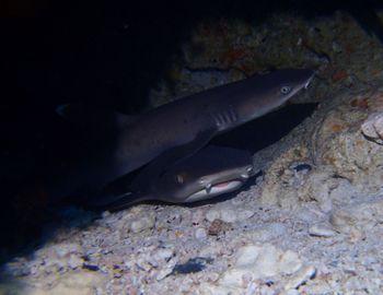 151230 shark.jpg