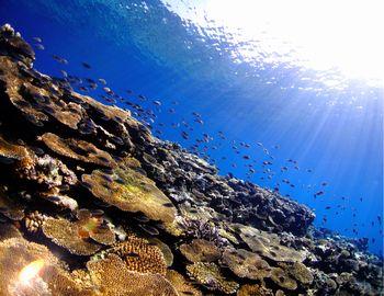 16/03/05 サンゴについて考えよう。 砂辺