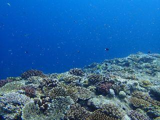 160710 coral.jpg