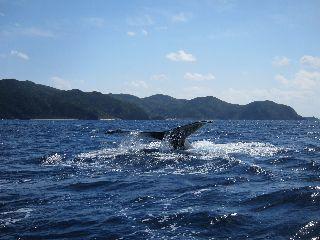 17/02/17 クジラの声を聞きながら。 ナガンヌ北
