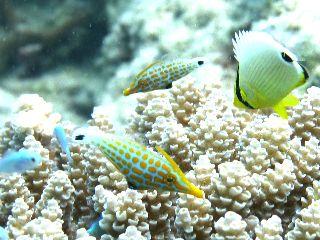 17/12/29 潜り納めのダイバーが増えてきましたね。 慶良間、チービシ