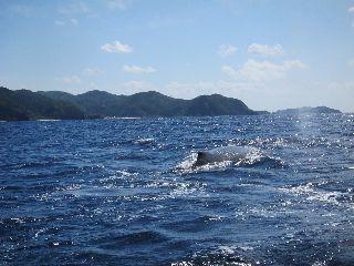 19/03/20 クジラもそろそろ見納めです! 慶良間