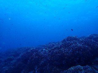 190517 coral.jpg