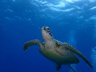 19/10/19 心のモヤモヤは透明度30mの海で浄化しましょう。 チービシ