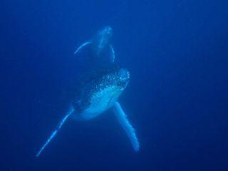 20/02/10 想像のはるか斜め上をいく衝撃です。 沖縄本島