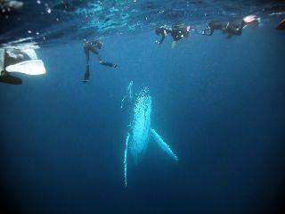 20/02/11 ホエールスイム成功、継続中です。 沖縄本島