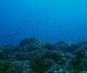200811 coral.jpg