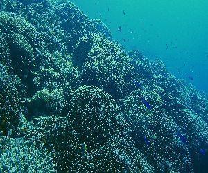201027 coral.jpg