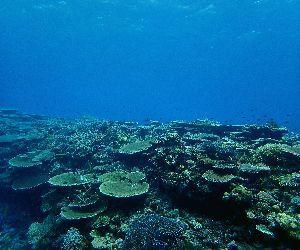 201110 coral.jpg