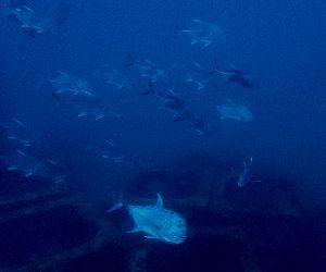 20/11/11 たまにはルートを変えてみましょう。 沖縄本島