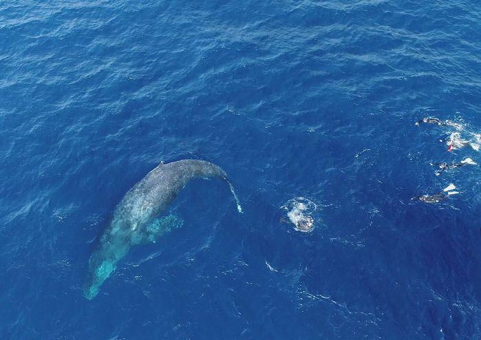 210115 whale1.jpg