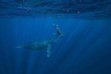 21/02/24 エスコートつきの親子クジラ! 沖縄本島