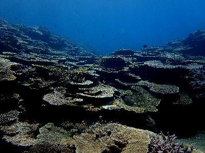 21/04/07 見事なサンゴの群生でした。 慶良間
